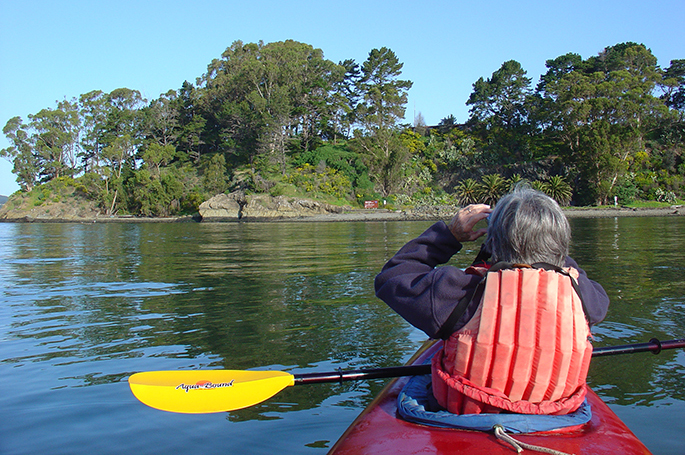 Rookery monitory by kayak at the Marin Islands